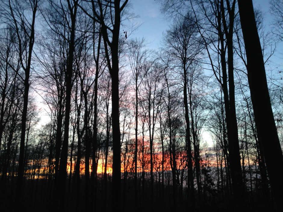 Sonnenaufgangsstimmung im Wald